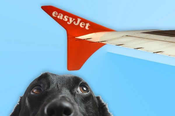 Easyjet – Pet Policy & tie up