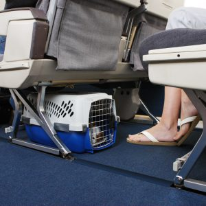Pet-friendly airlines fromUK