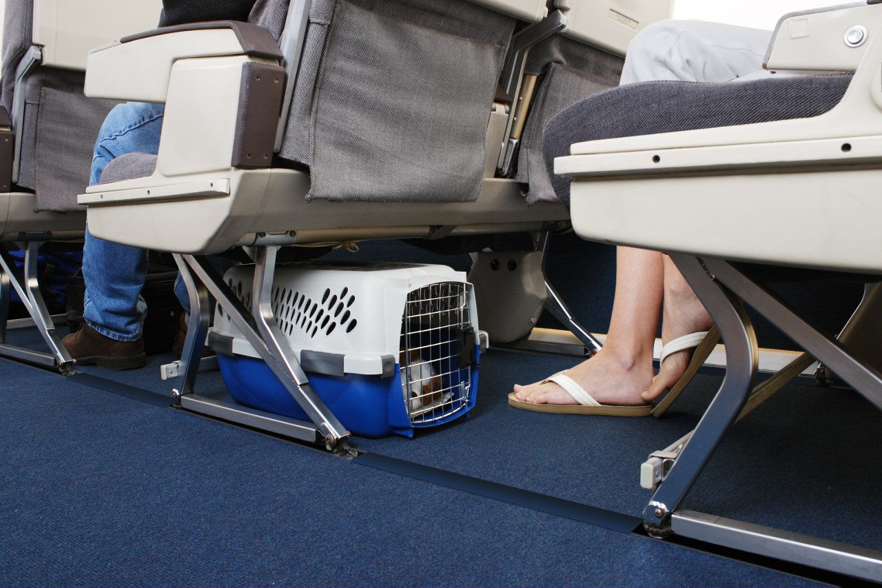 Pet-friendly airlines from UK
