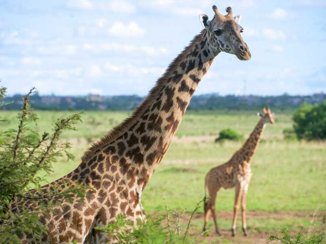 Last minutes cheap flights deals to Nairobi from London UK