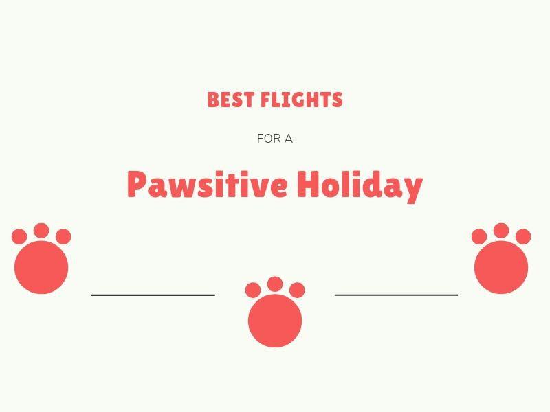 https://www.flightspro.co.uk/wp-content/uploads/2019/06/Best-flights-for-pet-friendly-holidays.jpg